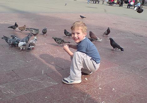 David i golubovi